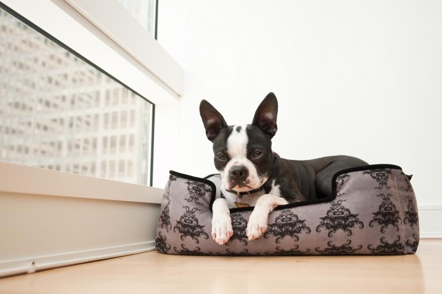royal crest dog bed