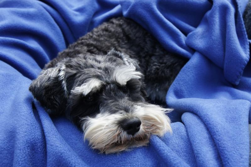 snuggle blanket denim 2